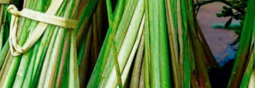 Confessions of a Naturaholic: How to Feed your Health Addiction with Lemongrass